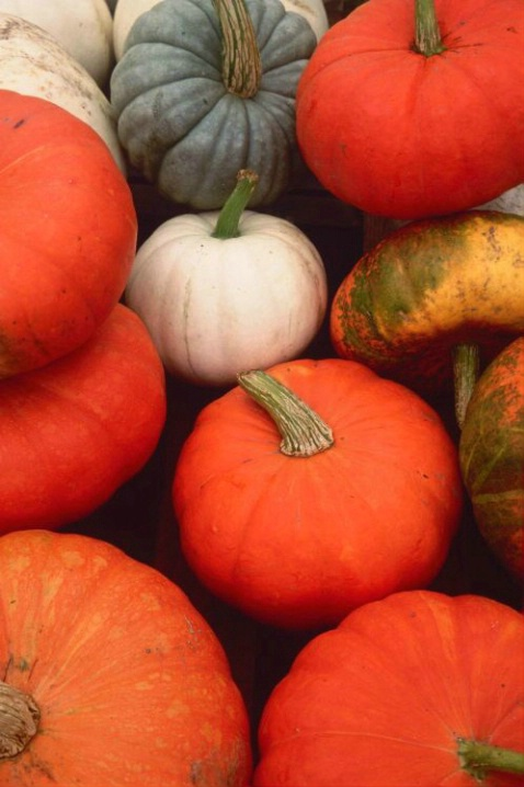 Pumpkins - ID: 3148411 © Deborah A. Prior