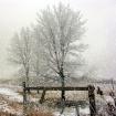 Let it snow, Let ...