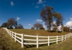 White Fence - Blu...