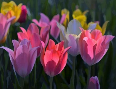 Spring Tulip Colors