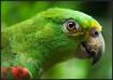 Bird of Honduras