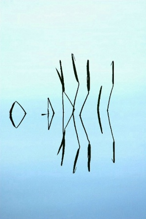 Damselflies & Reeds