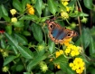 Butterfly & Flowe...