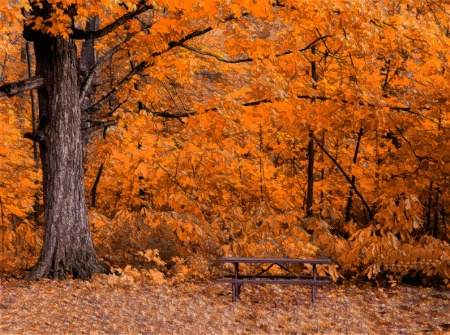 A Picnic in the Autumn Woods