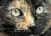 NIkko's Eyes