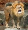 Half a roar day