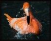 Flamingo's Ba...