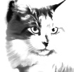 Nice Kitty ???