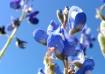 Blue Reaching Blu...