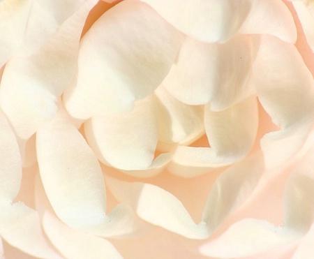 Camellia Macro