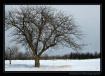 Winter Appletree