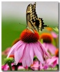 Butterfly Dance 2