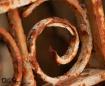Rusty Curl