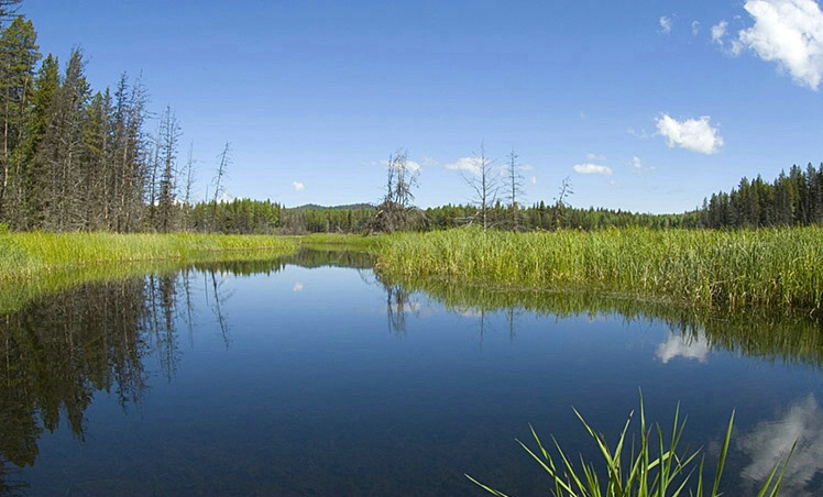 Montana Meadow - ID: 3597153 © Larry J. Citra