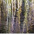 2Reflection of Reeds - ID: 3597157 © Larry J. Citra