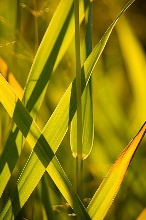 Shadows on Grasses - ID: 3602390 © Larry J. Citra