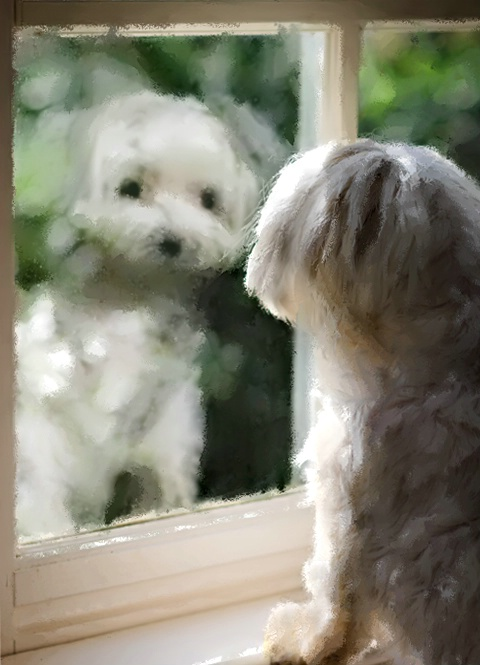 Doggie Reflections