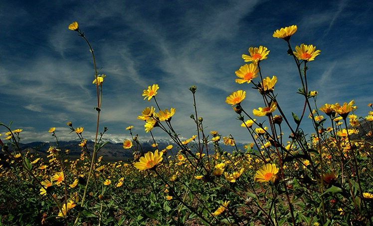Death Valley Gold - ID: 3654260 © Gary W. Potts