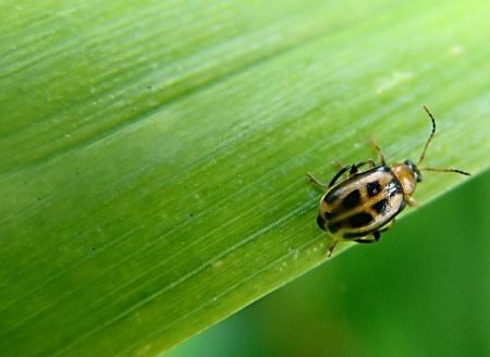 Happy Little Beetle