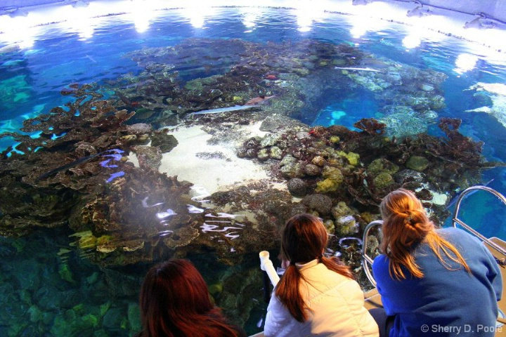 N.E. Aquarium