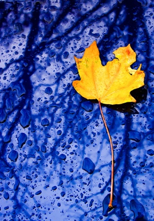 Rainy Day, Yellow Leaf, Blue Car