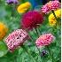 © Douglas Pignet PhotoID # 3733436: F82 Garden Flowers