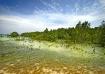 Palawan Mangroves