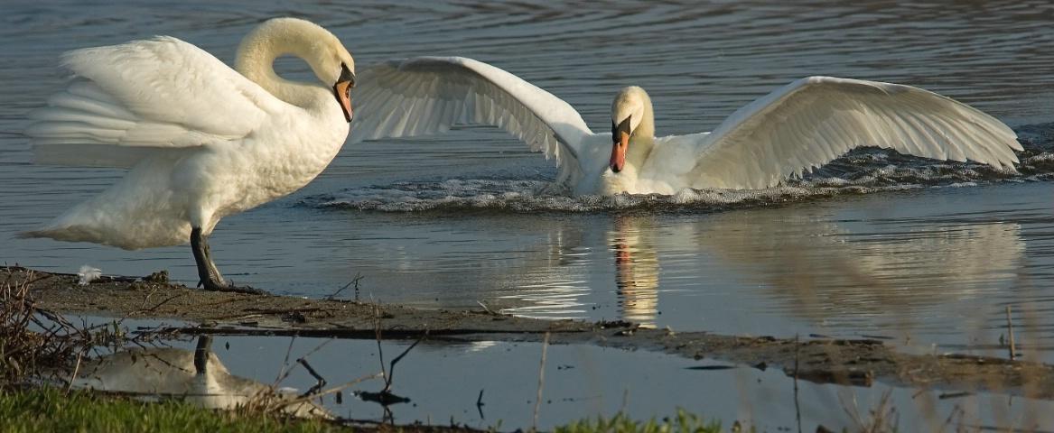 Lovers Landing