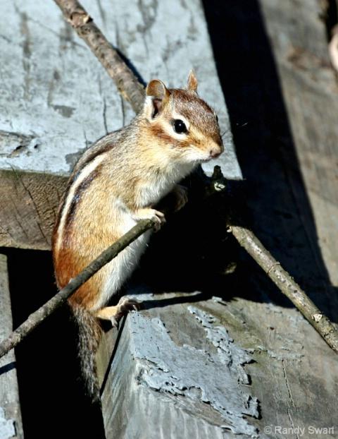 Better Shot of Alvin