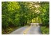 - Sunlit Roadway ...