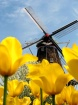Windmill among th...