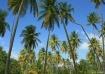 Tobago Palm Garde...