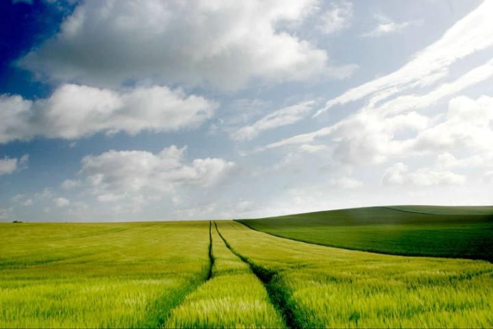 Hill & Field
