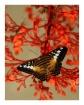 Japanese motifs (...