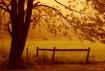 Maple at Dawn