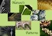 Nature's Patt...