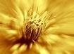 Gold blast