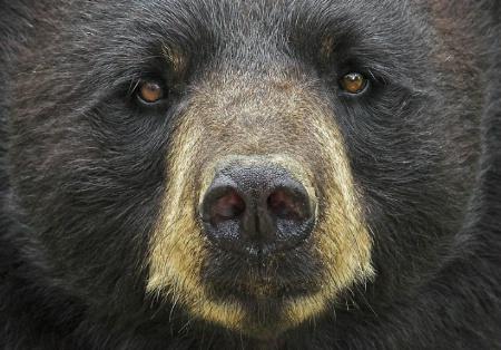 Mrs. Bear's Stare