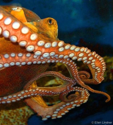 calamari non-fritti