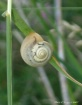 angles of a snail