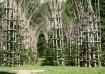 Vegetal cathedral