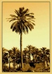 high palm