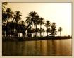 palms on margin