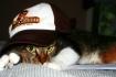 ~Cool Cat~