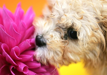 Time to Smell the Flowers