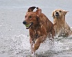 Sea Dogs 1