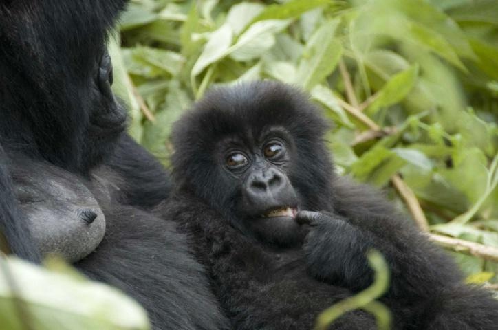 Mom and Baby - ID: 4138448 © Ann E. Swinford