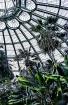 Laken Greenhouses