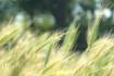 Sweet Summer Gras...