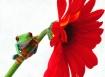 Frogger Flower